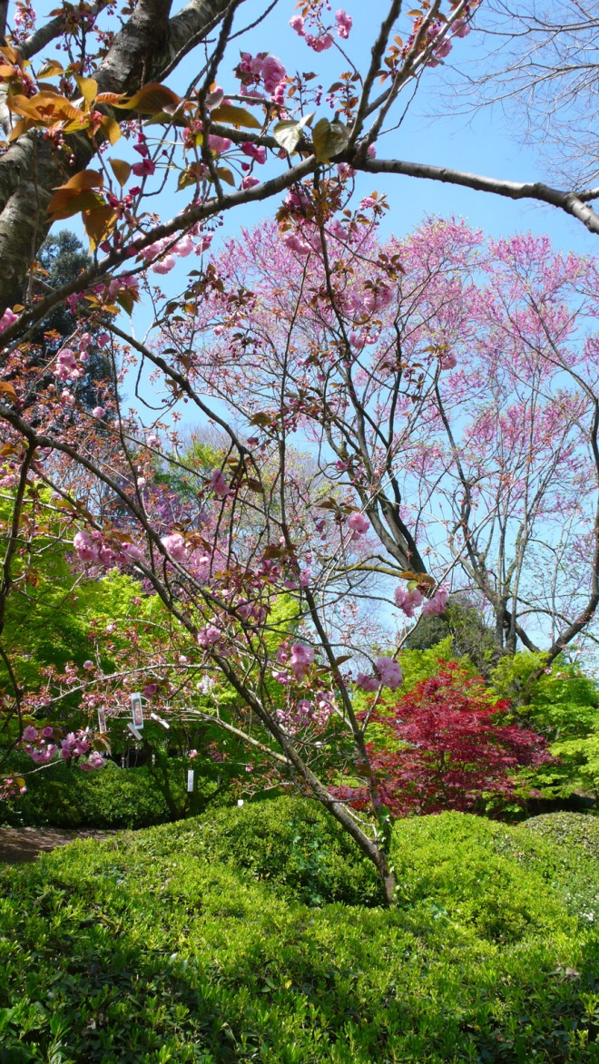 Hanami-Orto-Botanico-1